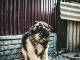 Оказване на първа долекарска помощ при ухапване от куче